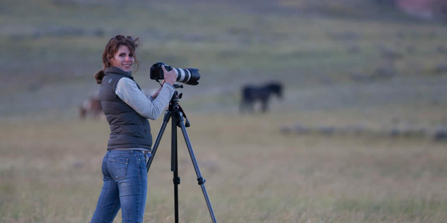 Professional Wildlife Artist Carrie Wild Photographs Wild Horses On The McCullough Peaks Wildlife Management Area Outside Of Cody Wyoming