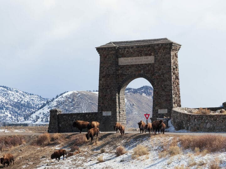 The Roosevelt Arch, Built Of Local Columnar Basalt, Was Built As A Welcoming Gateway To Yellowstone National Park