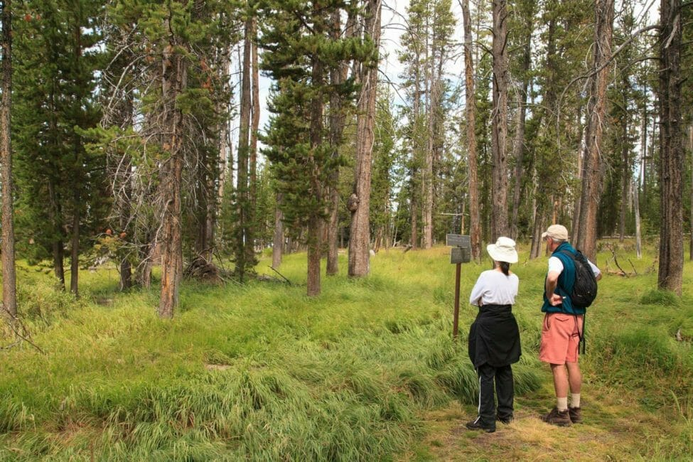 Two Hikers Pause To Read A Trail Marker In Yellowstone National Park