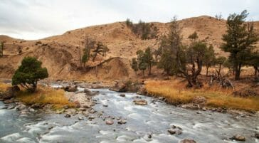 The Gardiner River Flows Toward The North Gate Of Yellowstone National Park