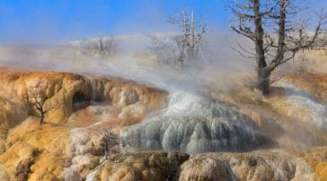The White And Golden Travertine Terraces At Mammoth Hot Springs Are Found At The Northern Entrance Of Yellowstone National Park